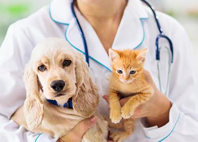 kontakt, weterynarz trzymający kota ipsa