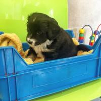 czarny-pies-pojemniku