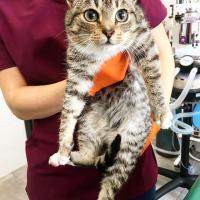 kotek-trzymany-przez-weterynarza